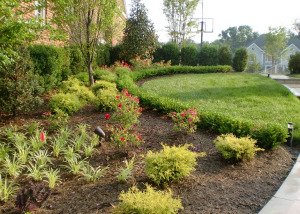Boxwood plantings garden Great Falls
