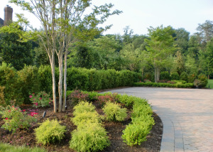 Boxwood plantings hedge Great Falls